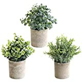 THE BLOOM TIMES Lot de 3 Petites Plantes artificielles en Pot en Plastique Faux...
