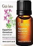 Aceite esencial de geranio egipcio - Una revitalización floral de belleza juvenil (10 ml) - Aceite...