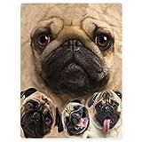 SXCHEN Blankets Plush Sofa Bed Throw Blanket Funny Pug Dogs Pet Animal 60'x80'