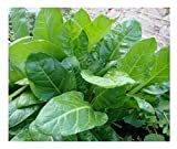 PREMIER SEEDS DIRECT - Spinach - Perpetual - 14 Gram ~ 700 Seeds