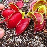 GEOPONICS 100 Pcs Flytrap Graine Dionaea graines clip DionÃe Seeds graines...