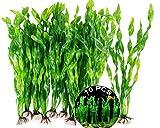 Planta Acutica Artificial De Plstico Acuario 10 Piezas Plantas De Decoracin para Acuarios Plantas De Pecera Grande Plantas De Plastico Plantas Acuticas Artificiales Plstico para Peceras Acuarios