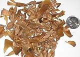 Paquete de semillas del rbol de cedro del Atlas, Cedrus atlantica Semillas ideal para rboles Bonsai 10