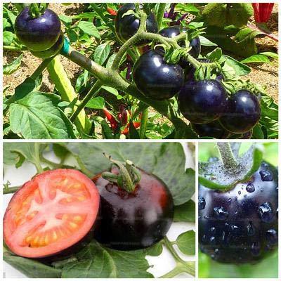 Generic Fresh 500pcs tomate SEMILLAS de vegetales para plant