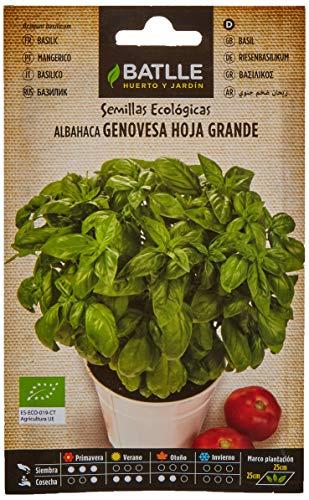 Semillas Ecológicas Aromáticas - Albahaca Gigante Genovese