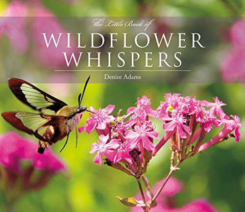 The Little Book of Wildflower Whispers (Hardcover)