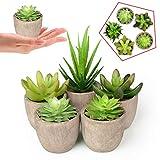 Abree Lot de 5 Plantes Grasses artificielles Pots Gris - Faux Cactus Assortis - Décoration pour la Maison ou Le Bureau