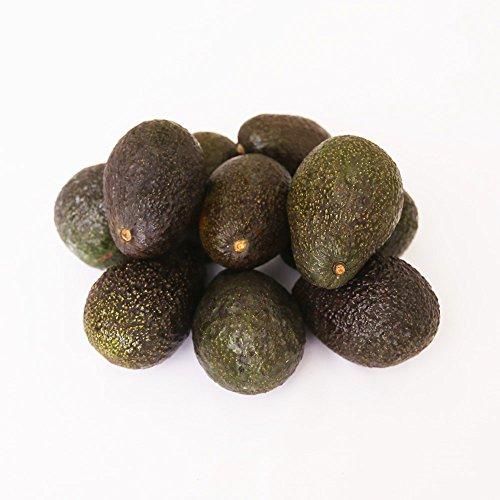 アボカド (10玉) 新鮮 フルーツ