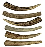 WhiteTail Naturals 6 Pack- Small 4'-5' All Natural Deer Antler Dog Chews