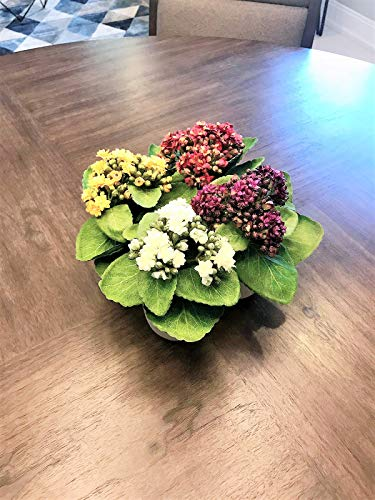 Faux Set of 4 Tabletop Kalanchoe Succulent/ Flower Arrangements in Ceramic Pot Yellow, White, Red and Purple