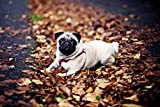 Jigsaw 500 Pieces Pug on The Fallen Leaves Wooden DIY Jigsaws Puzzles Adults Kids Eductional Toys Birthday Festival Unique Gift