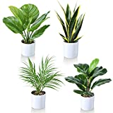 Kazeila Set of 4 Mini Potted Fake Plants,16 Inch Artificial Fiddle Leaf Fig Plant/Snake Plant/Areca Palm/Calathea Plant for Home Office Hotel Bookstore Cafe Modern Decoration