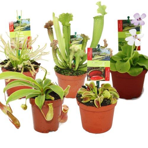 Exotenherz - Set de inicio de plantas carnívoras - 5 planta