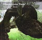 Olea europaea Farga (Biblioteca Taula del Snia)