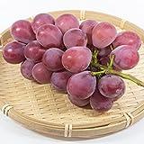 ぶどう農家おすすめのブドウの苗木販売店・専門店一覧【まとめ】 274
