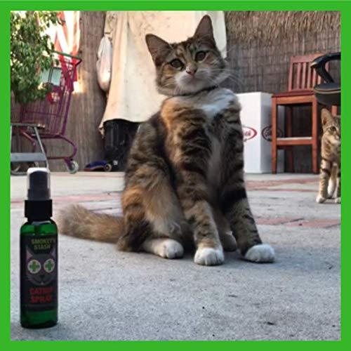 Smokey's Stash Catnip Spray for Cats from 2 Ounce Fresh Premium Maximum Potency nip Treat