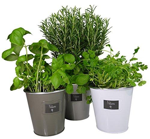 Khevga - Juego de 3 maceteros de metal para hierbas