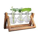 DEDC 1pcs Jarrn de Vidrio para Planta de Hidropnica con Soporte de Madera Jarrn de Bulbos Jarrones de Bombilla para Jardinera Decoracin de Casa Escritorio (3 Jarrones + Estante)