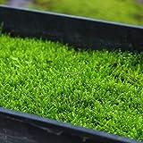 Portal Cool 100pcs / bolsa: 100 piezas/bolsa de musgo Sphagnum Semillas Bonsai bola de musgo semillas de la hierba decorativo C1My