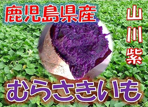 鹿児島県産 むらさきいも 紫芋 「山川紫」 1箱:約5kg サイズ:Sサイズ以上の混合 新芋(2019...