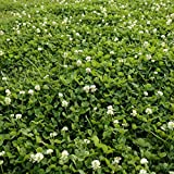 Outsidepride White Dutch Clover Seed: Nitro-Coated, Inoculated - 5 LBS