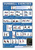 Laminated Dumbbell Exercise Poster/Chart - Lower Body/Core/Chest/Back - Created by Fitness Experts with University Degrees in Exercise Physiology - Fitness Poster - Dumbbell Workout Chart