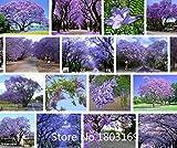 semillas del rbol de la flor de 100 PC azul prpura Jacaranda Mimosifolia rbol arbustos, flores! Planta Bonsai Garden
