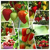 Red Strawberry Climbing Strawberry Fruit Plant Seeds Home Garden New 300 pcs