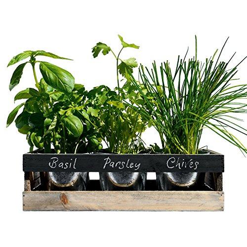 Giardino di Erbe per interni – da Viridescent – Contenitore in legno per davanzali di cucina. Contiene tutto ciò che vi serve per far crescere le vostre erbe aromatiche. Perfetta idea regalo. Disponibile oggi in offerta!