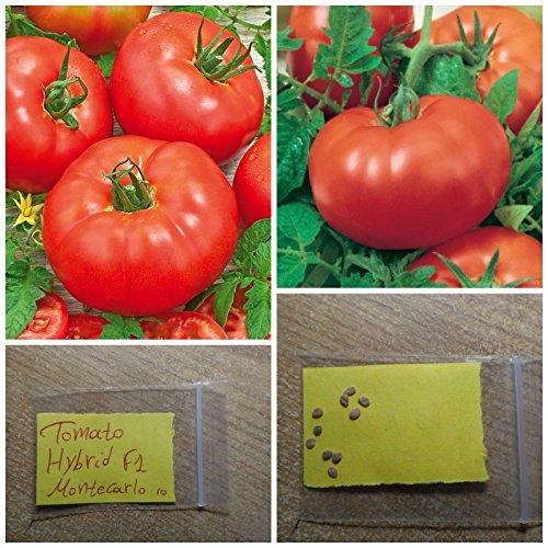 Pomodoro '' F1 Montecarlo '' HYBRID ~ 10 Semi di alta qualit - rosso dolce frutto di grandi dimensioni