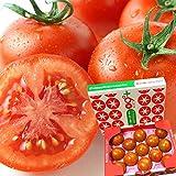 トマト フルーツトマト 高糖度 A品 1kg 約8~16玉 NKKアグリドリーム 茨城県産