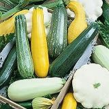 Risitar Graines - 50pcs Rare Mélange de courgettes (jaune, verte et blanche),...