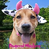 Pampered Whiskers Mad Cow Costume for Dogs and Cats (Medium 12-15' Collar)