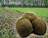 原産地:北海道 内容量:2kg