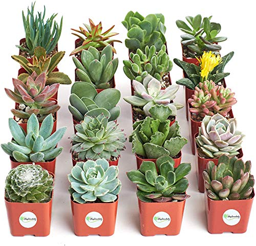 Shop Succulents | Unique Collection of Live Plants, Hand Selected...