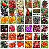 Un paquet de 100 graines semences Bonsai Tomate Cerise Mini pot doux fruits légumes frais bio