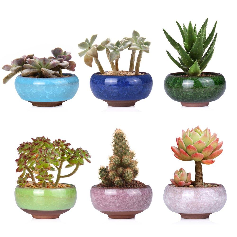 Wituse Small Plant Pot Succulent Pot Ceramic Small Indoor Plant Pot For Office Plant Cactus 2 5 Inch 6 Pcs Amazon Co Uk Kitchen Home