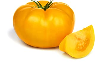 20 seeds ORGANIC Brandywine YELLOW Tomato Rare Heirloom Beefsteak Non-GMO Fresh