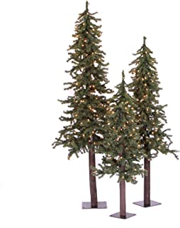 Vickerman Natural Alpine Tree Set lit by 500 Clear lights, with three trees sized..