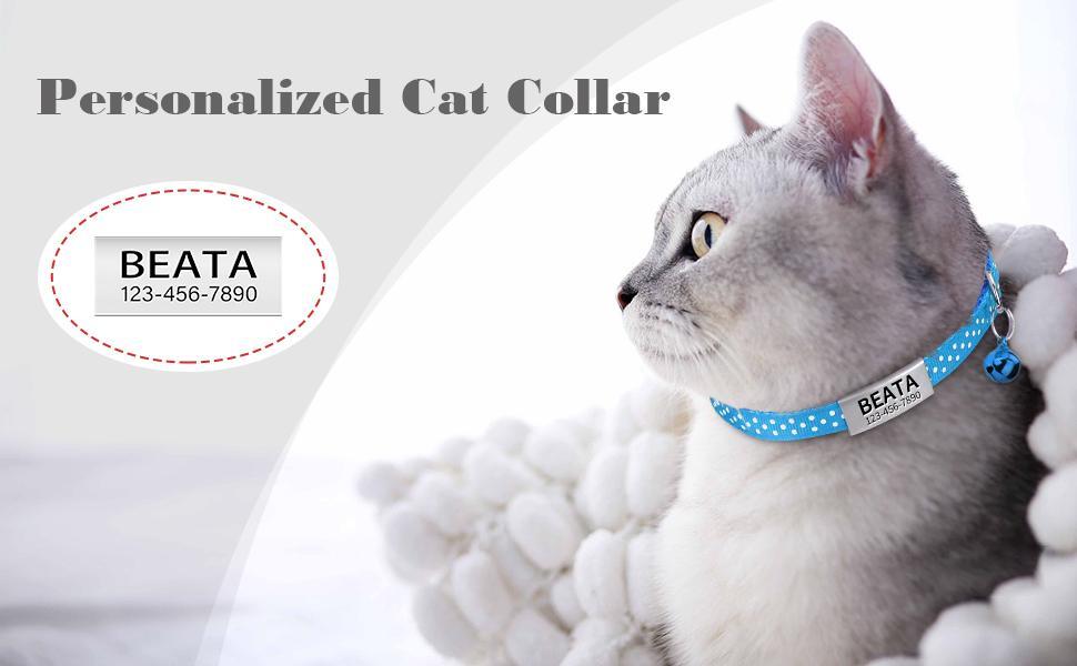 collar gato personalizado