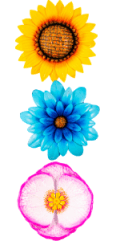 floral flower fence wall decor