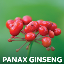 Panax Ginseng for Adrenal Gland Support