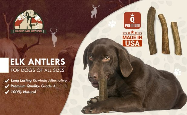 long lasting chews for dogs, elk antlers for dogs, large elk antlers for dogs, natural shed antlers