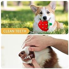 puppy chew toys