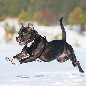 dog harness gentle leader no pull dog harness dog harnesses for small dogs dog harness large breed