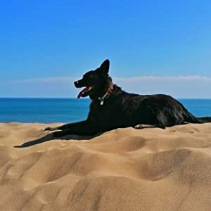 NaviTagi Dog ID Tag