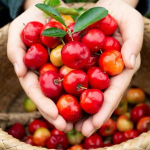acerola cherry vitamin c