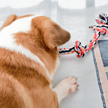 dog play rope toy 1