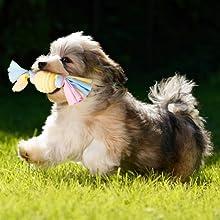 safe puppy toys