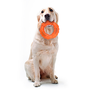 ring shape dog chew toy